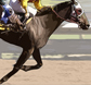 Belmont Stakes tickets at TicketsNow